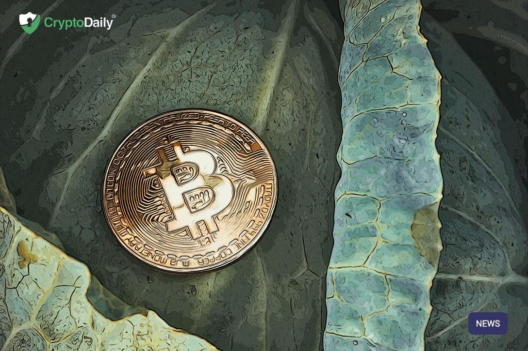 Emotions Run High During Craig Wright's Satoshi Nakamoto Hearing - Is He Really The Creator Of Bitcoin?