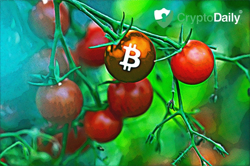 Bitcoin Transactions Carries 6X More Than PayPal